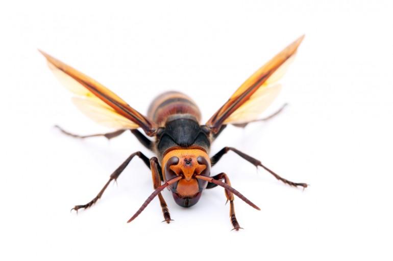 スズメバチ 夢 占い