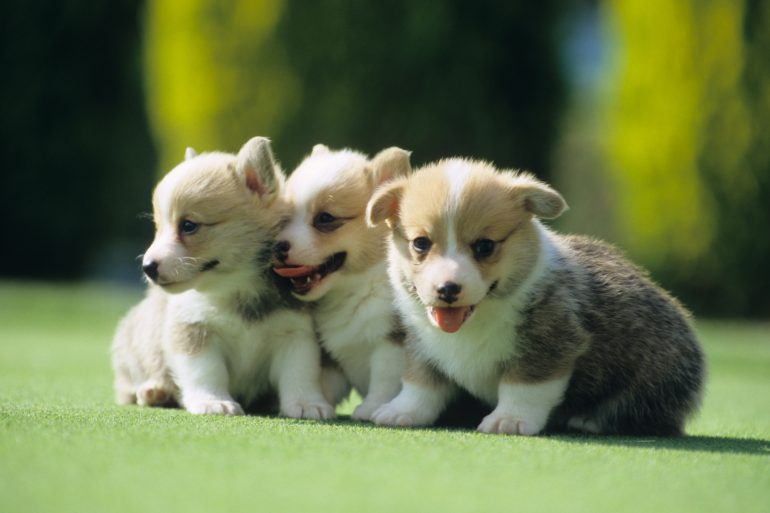 Puppies of a good friend